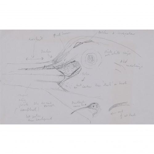 Clifford Ellis Curlew 1 pencil sketch