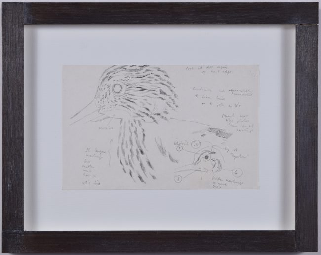 Clifford Ellis Curlew 2 drawing new naturalist Nicholson frame