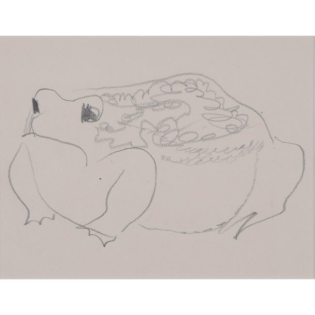 Clifford Ellis Frog pencil sketch new naturalist in Nicholson butt-jointed frame