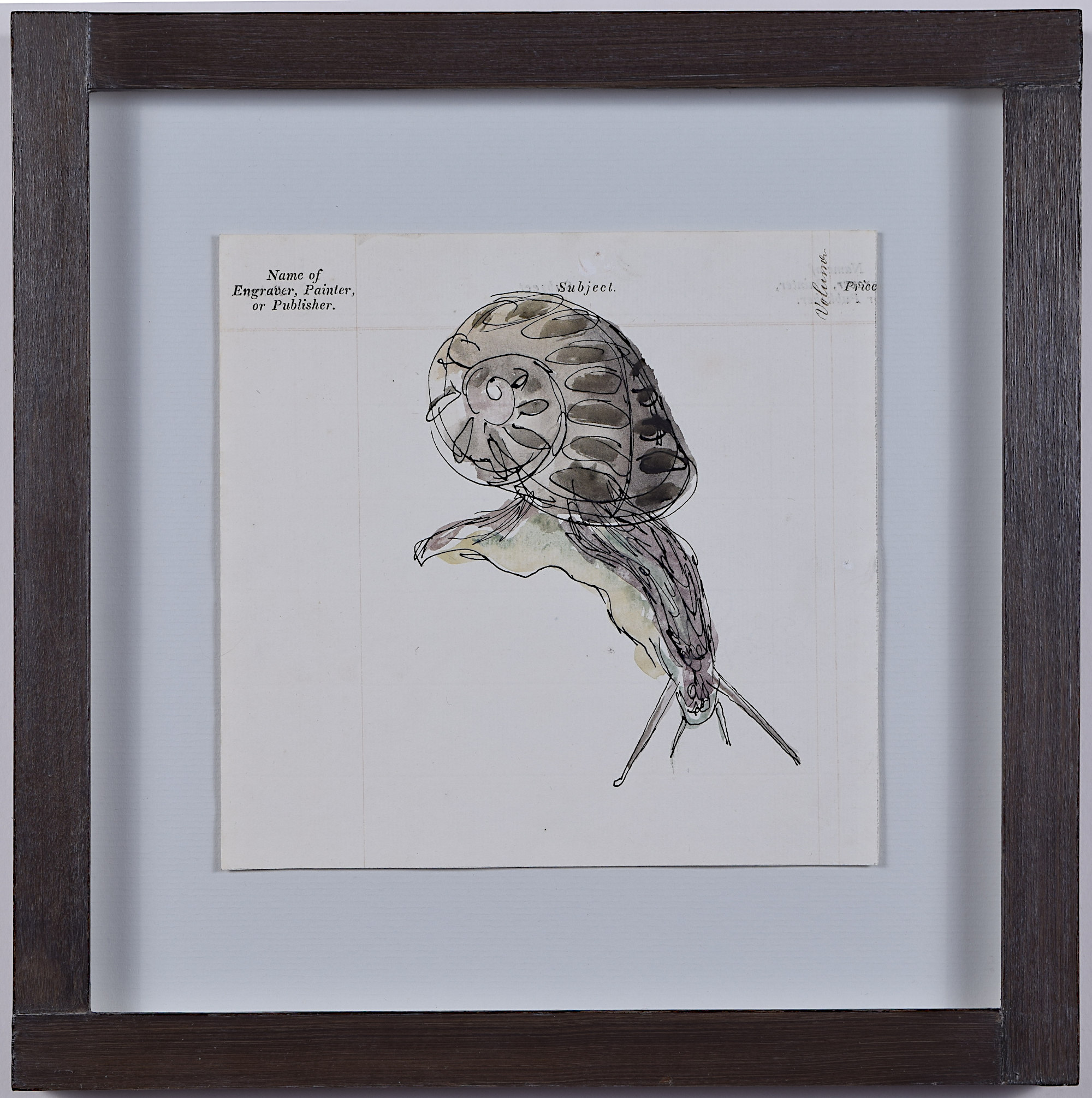 Rosemary Ellis Snail i watercolour