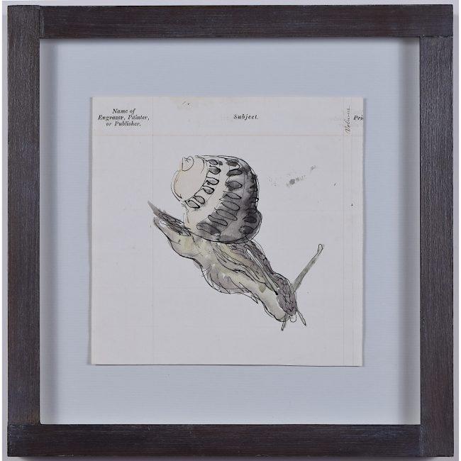 Rosemary Ellis snail ii watercolour