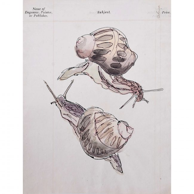 Rosemary Ellis Snails iv
