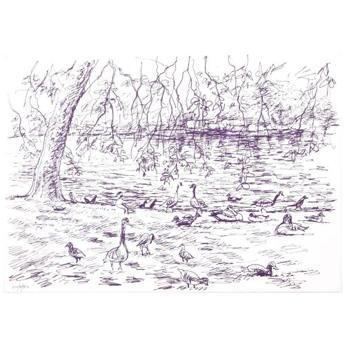 Ducks original pen and ink sketch Derrick Sayer for Beverley Nichols Cats ABC
