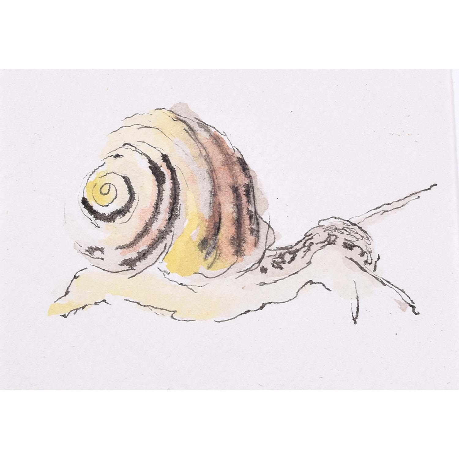 Rosemary Ellis Snail XII Watercolour