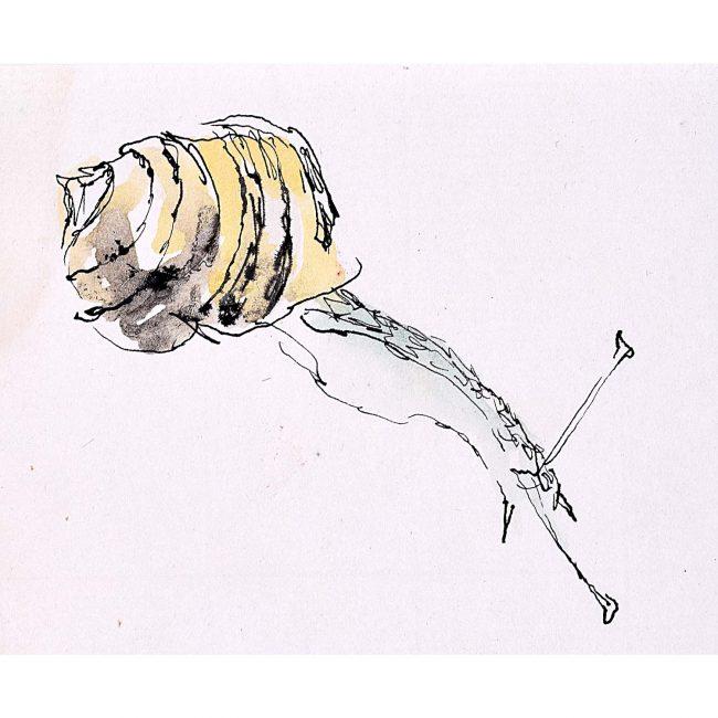 Rosemary Ellis Snail XIII