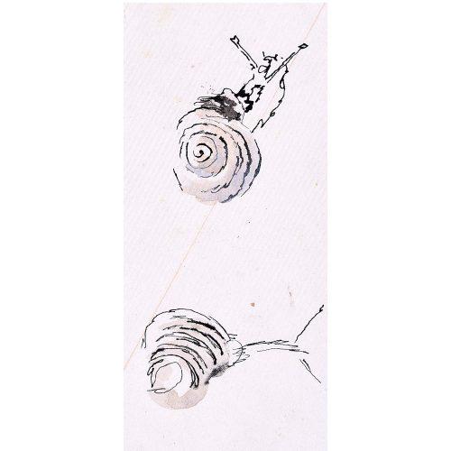 Rosemary Ellis Snail XIV Watercolour