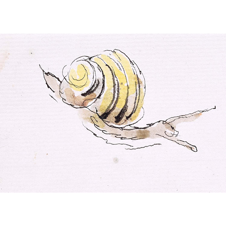 Rosemary Ellis Snail XV Watercolour