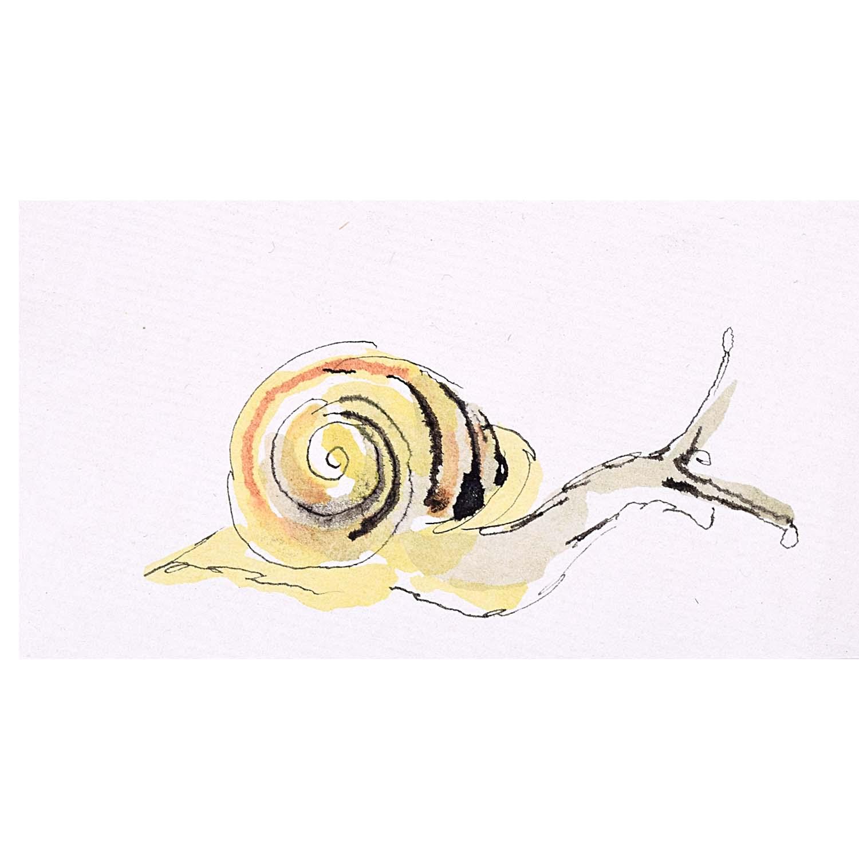 Rosemary Ellis Snail XVI Watercolour