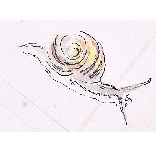 Rosemary Ellis Snail XVII Watercolour