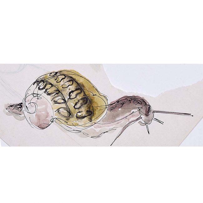 Rosemary Ellis Snail XVIII Watercolour