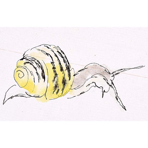 Rosemary Ellis Snail X Watercolour